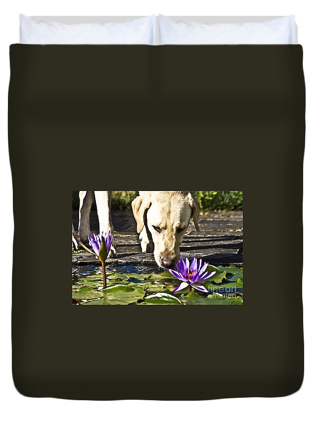 Heiko Duvet Cover featuring the photograph Carla's Dog by Heiko Koehrer-Wagner