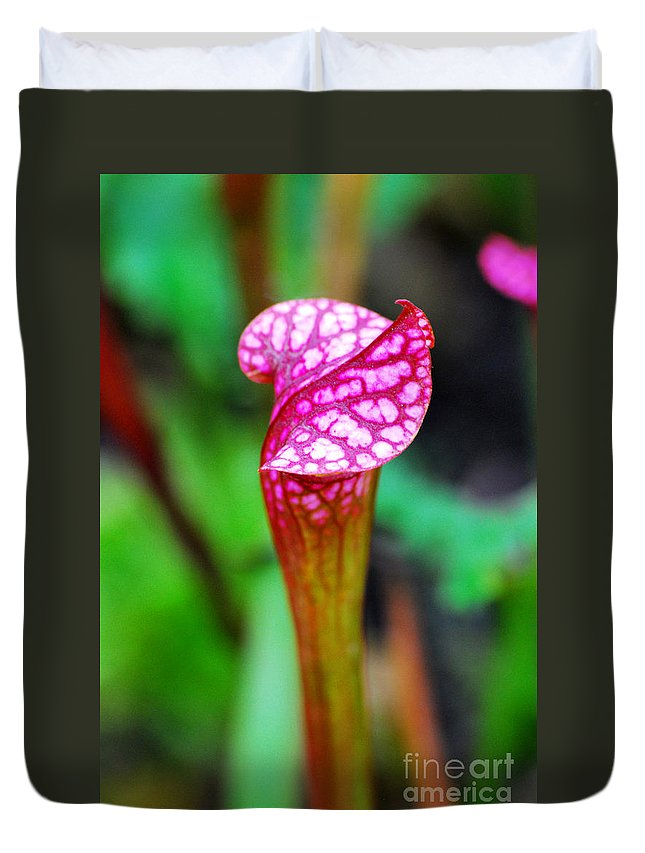 Carnivorous Duvet Cover featuring the photograph Carnivorous Plant I by Nancy Mueller