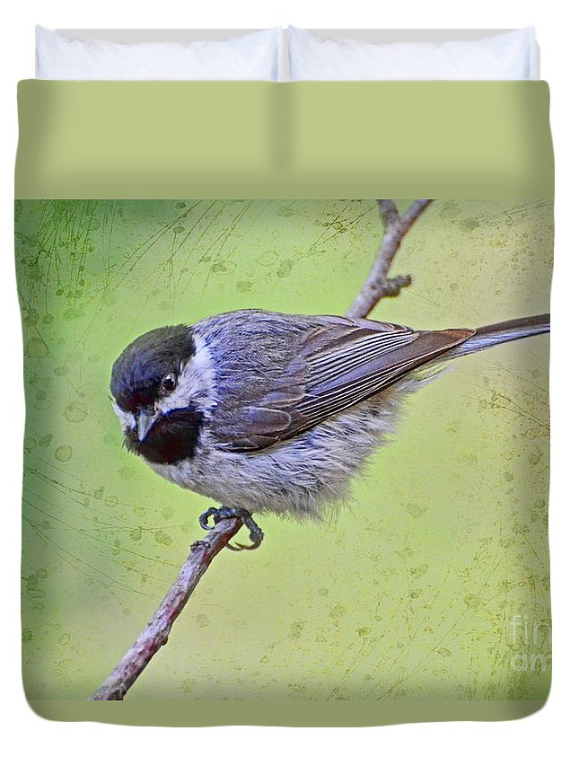 Chickadee Duvet Cover featuring the photograph Carolina Chickadee On Angled Perch by Debbie Portwood