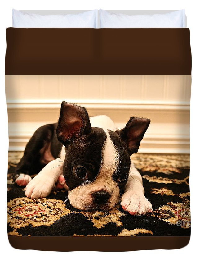 Animal Duvet Cover featuring the photograph Carpet Cleaner by Susan Herber