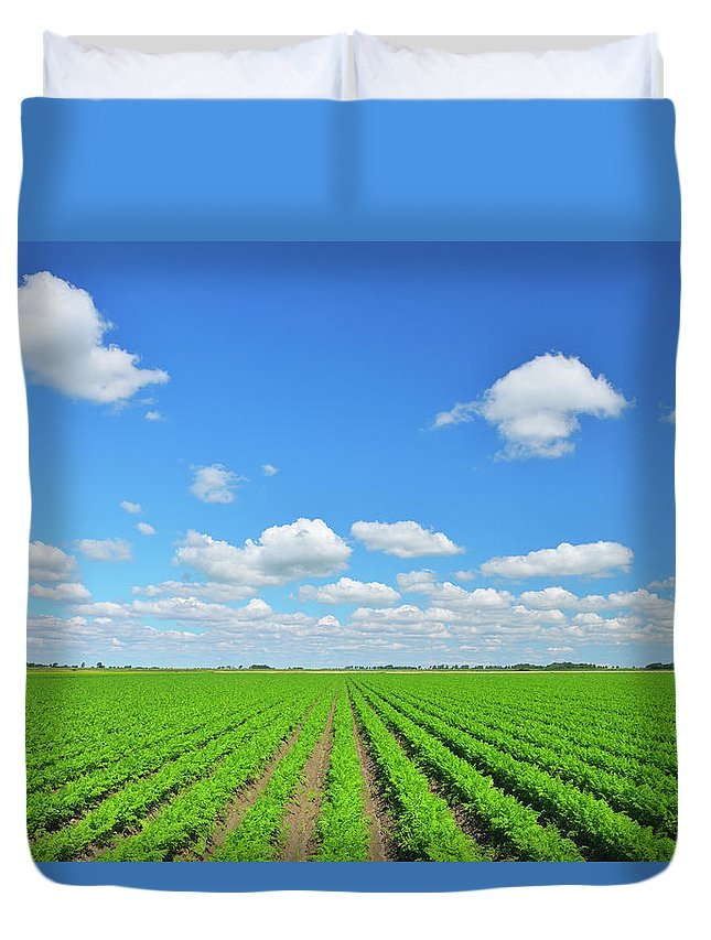 Tranquility Duvet Cover featuring the photograph Carrot Field by Raimund Linke