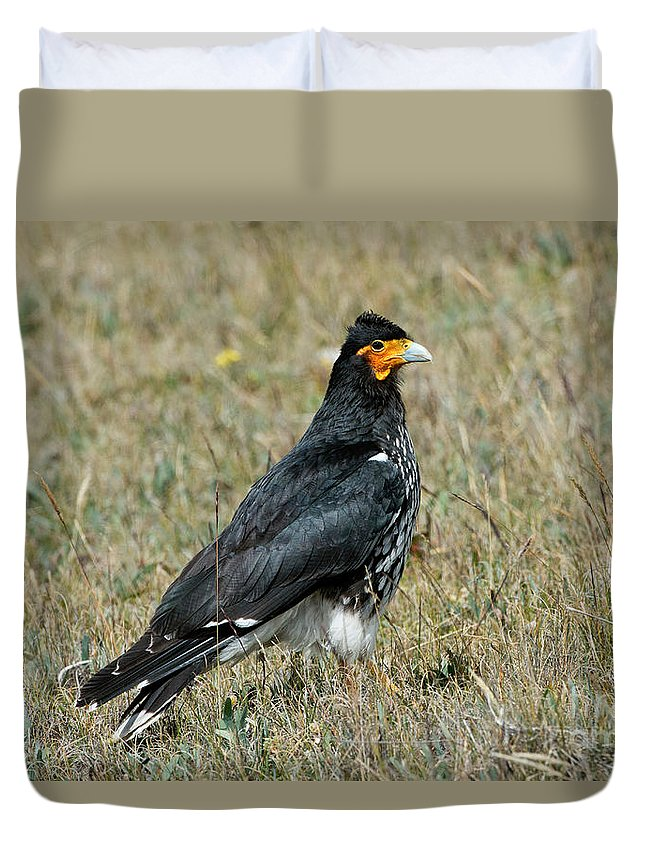 Carunculated Caracara Duvet Cover featuring the photograph Carunculated Caracara by Anthony Mercieca