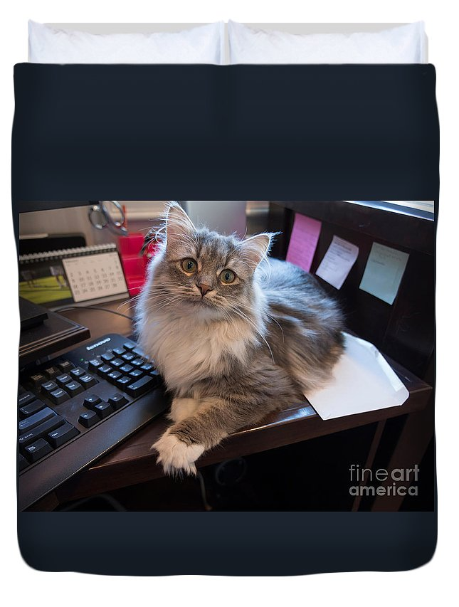 Cat Duvet Cover featuring the photograph Cat And Keyboard by Louise Heusinkveld