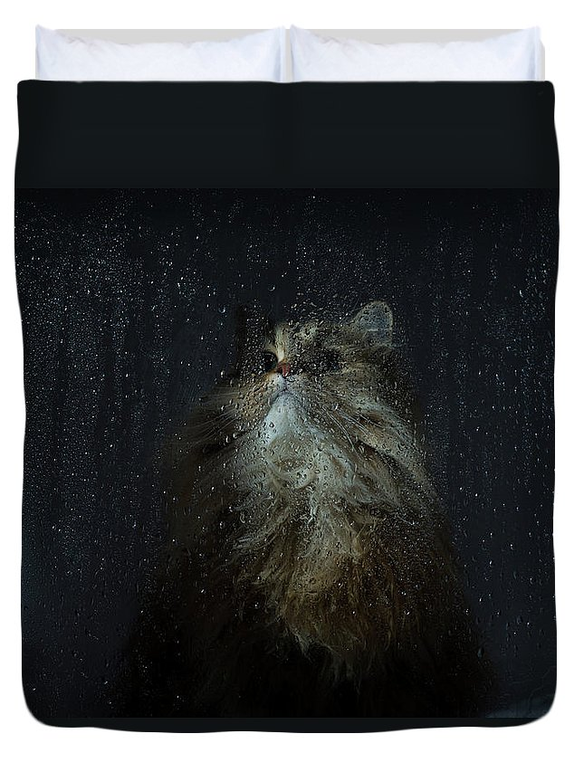 Pets Duvet Cover featuring the photograph Cat By Rainy Window by Benjamin Torode