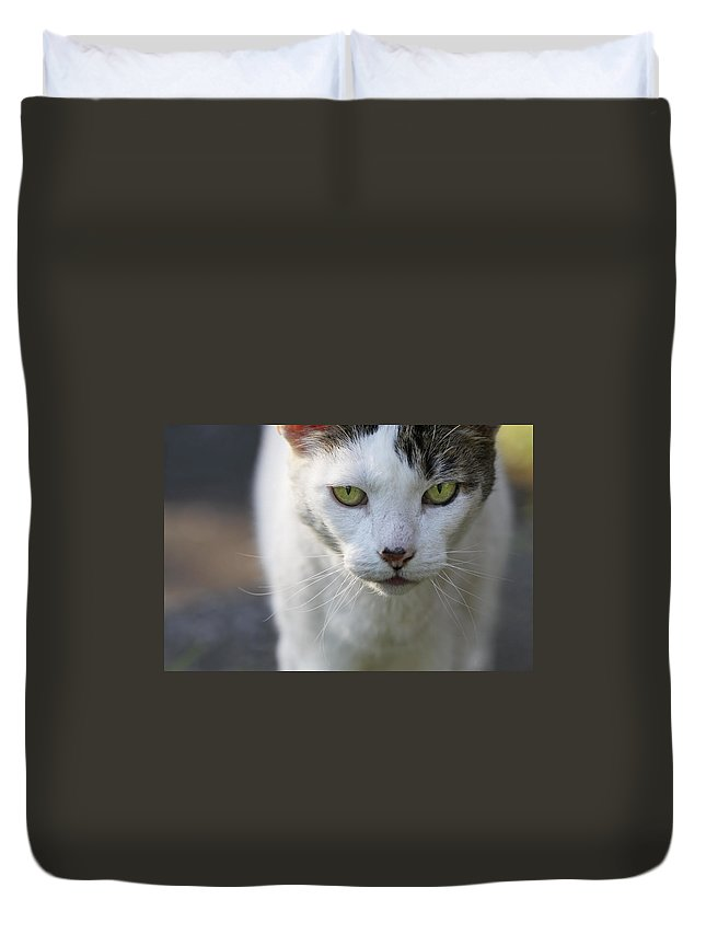 Close-up Duvet Cover featuring the photograph Cat Looking by Melinda Fawver