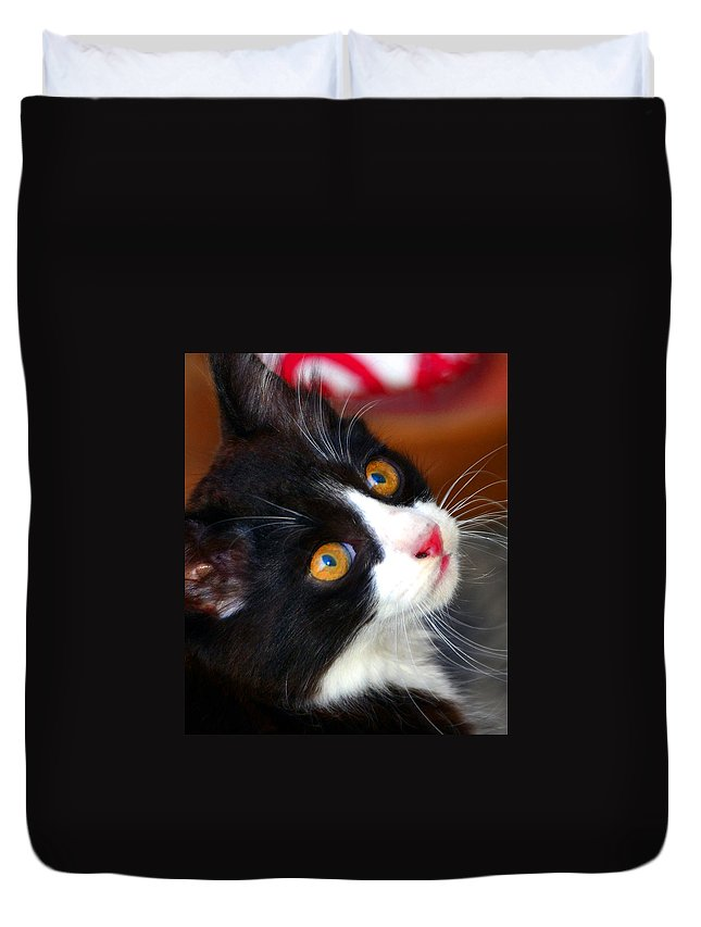 Kitten Duvet Cover featuring the photograph Innocent Kitten by David Lee Thompson
