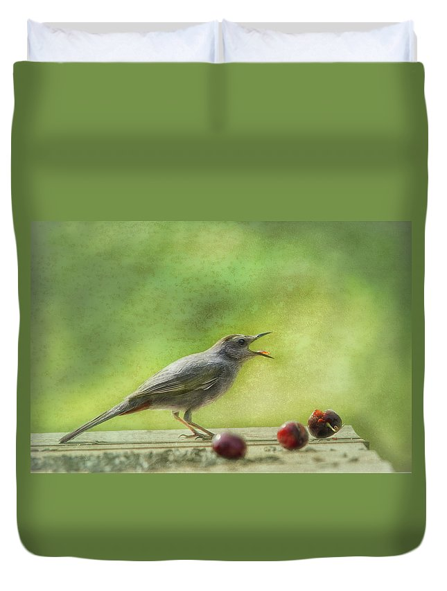 Catbird Duvet Cover featuring the photograph Catbird Eating Cherries by Susan Capuano