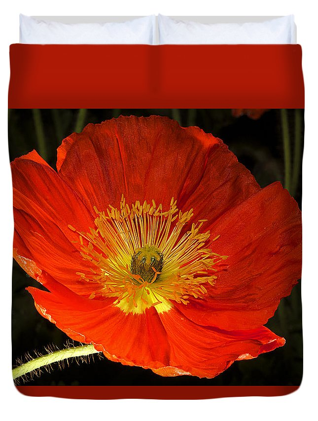Poppy Duvet Cover featuring the photograph Catching The Light by Phyllis Denton