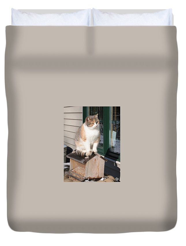 Rural Cat Duvet Cover featuring the photograph Catfeeder by Bjorn Sjogren