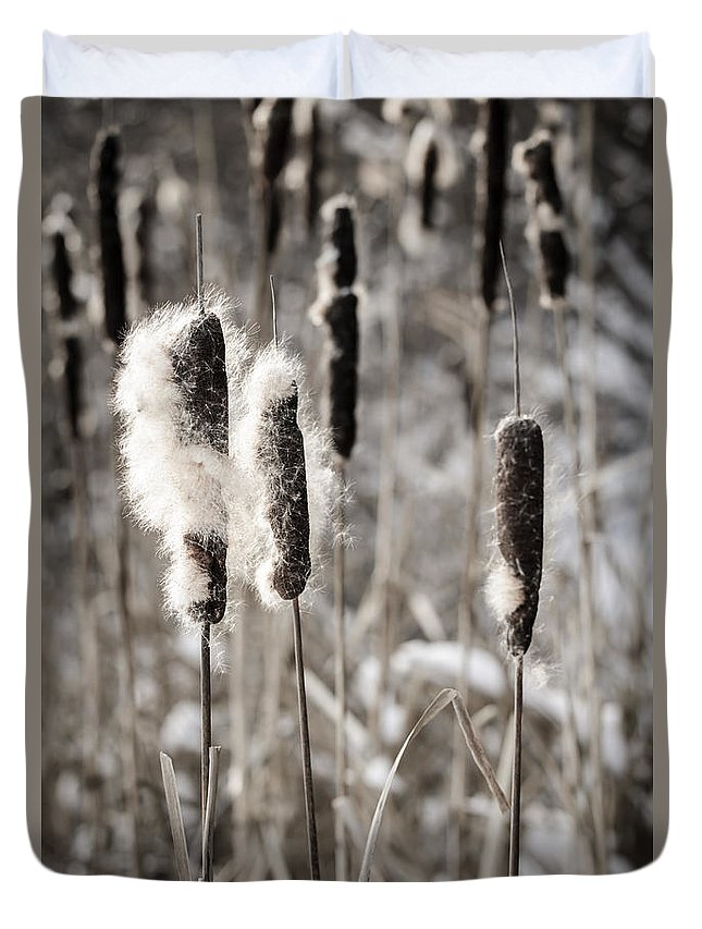 Cattails Duvet Cover featuring the photograph Cattails In Winter by Elena Elisseeva