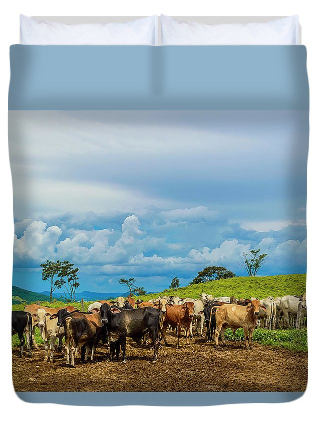 Grass Duvet Cover featuring the photograph Cattle by Kcris Ramos