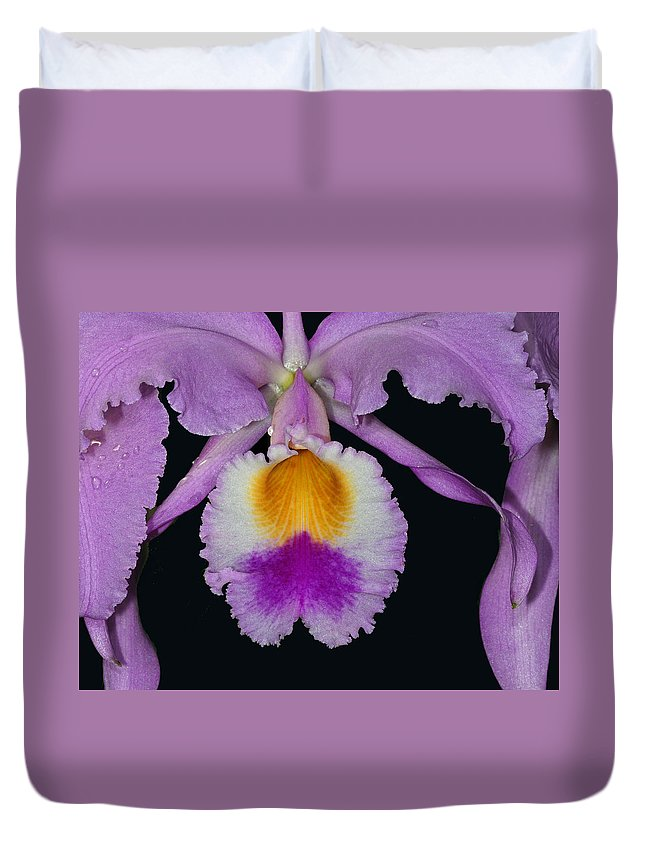 Cattleya Orchid Duvet Cover featuring the photograph Cattleya Orchid by Dave Mills
