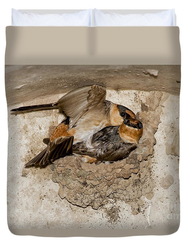 Cave Swallow Duvet Cover featuring the photograph Cave Swallows by Anthony Mercieca