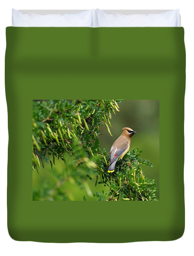 Birds Duvet Cover featuring the photograph Cedar Waxwing 3 by Ben Upham III