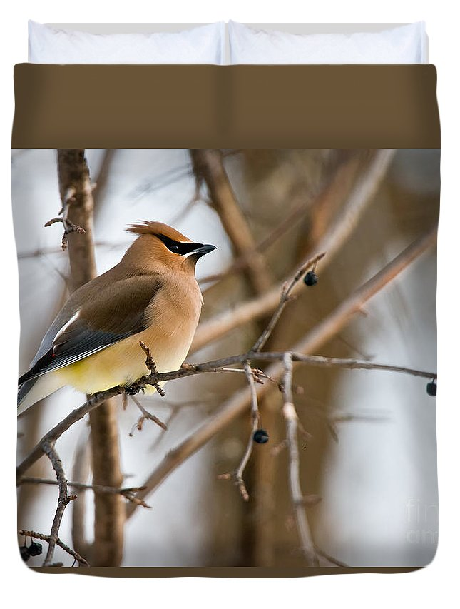Cedar Waxwing Duvet Cover featuring the photograph Cedar Waxwing Pictures 52 by World Wildlife Photography