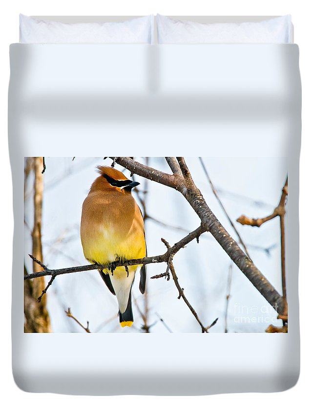 Cedar Waxwing Duvet Cover featuring the photograph Cedar Waxwing Pictures 53 by World Wildlife Photography