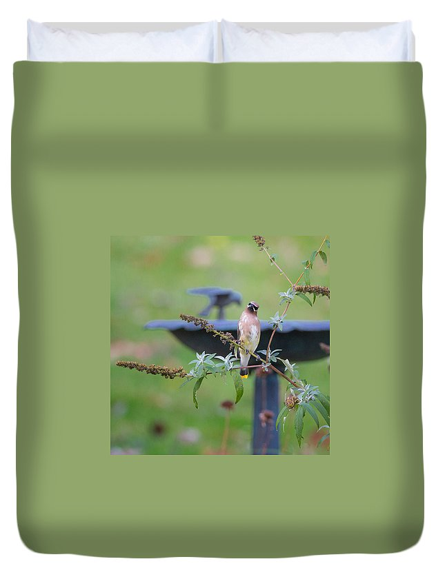 Ceadar Waxwing Duvet Cover featuring the photograph Cedar Waxwing Square by Bill Wakeley