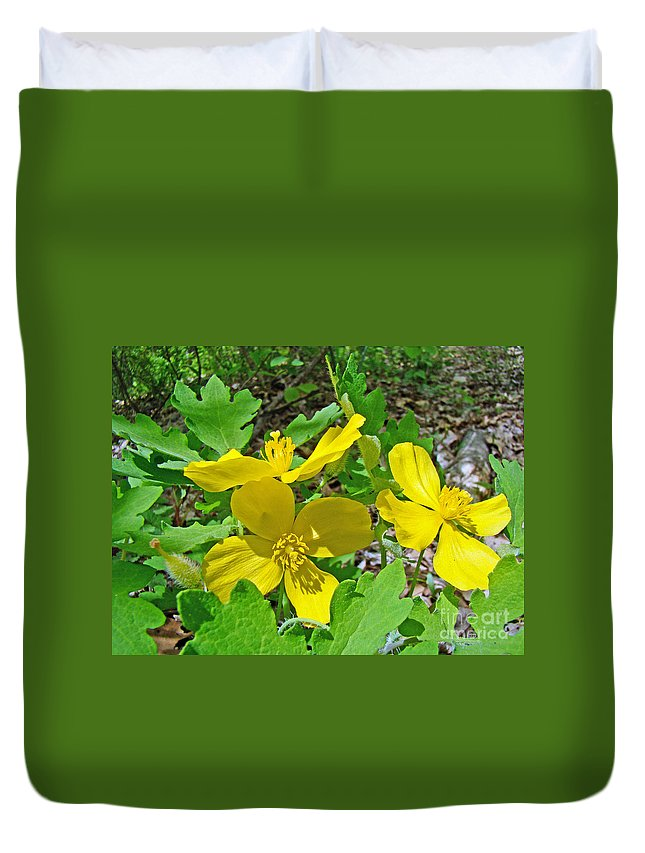 Celandine Duvet Cover featuring the photograph Celandine Poppy Or Wood Poppy - Stylophorum Diphyllum by Mother Nature