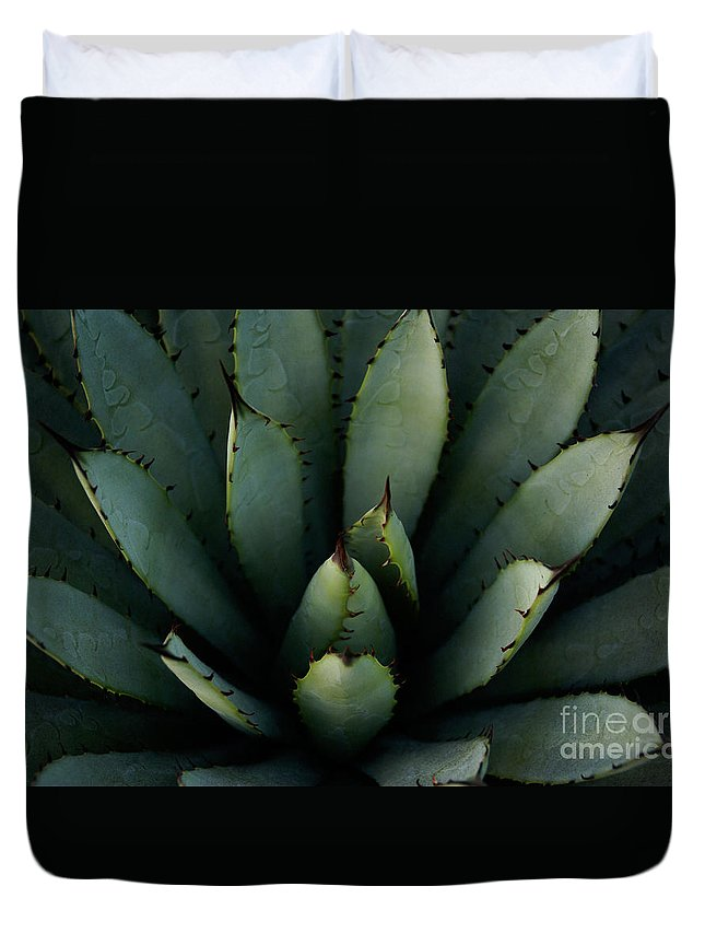 Cactus Duvet Cover featuring the photograph Centered by Linda Shafer