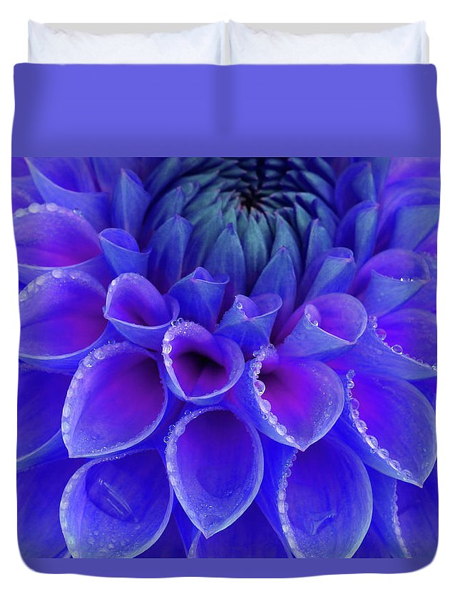 Haslemere Duvet Cover featuring the photograph Centre Of Blue And Purple Dahlia Flower by Rosemary Calvert
