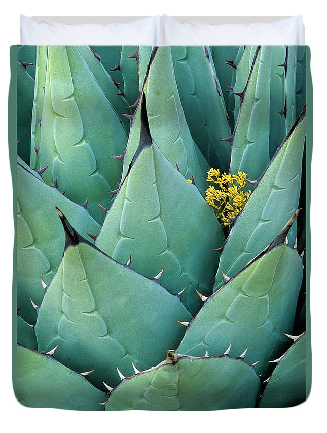 Agave Americana Duvet Cover featuring the photograph Century Plant and Tiny Blossom by Inge Johnsson