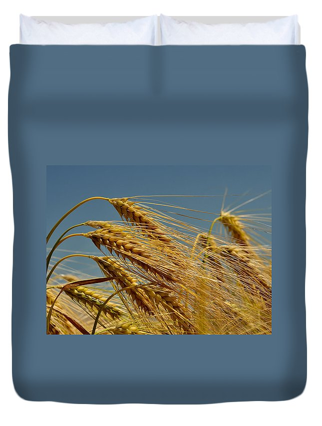 Wheat Duvet Cover featuring the photograph Cereals by TouTouke A Y