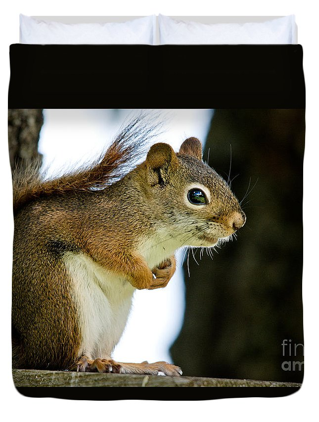 Squirrel Duvet Cover featuring the photograph Chatty Squirrel by Cheryl Baxter