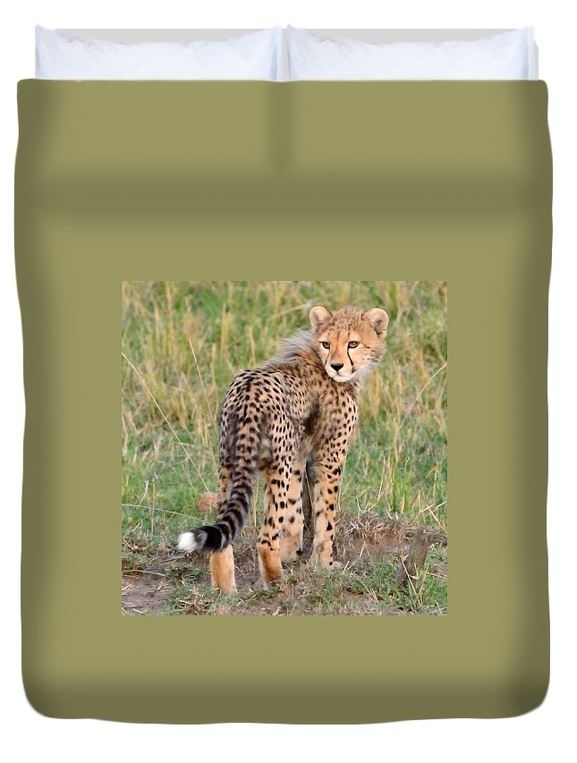 Cute Duvet Cover featuring the photograph Cheetah Cub Looking Your Way by Tom Wurl