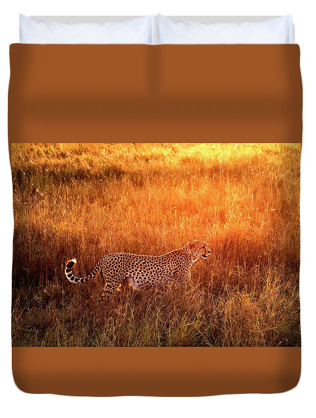 Scenics Duvet Cover featuring the photograph Cheetah In The Grass At Sunrise by Mike Hill