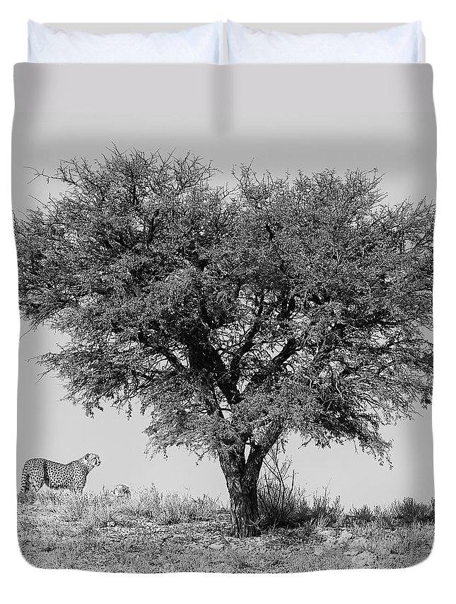 Cheetah Duvet Cover featuring the photograph Cheetahs And A Tree by Max Waugh