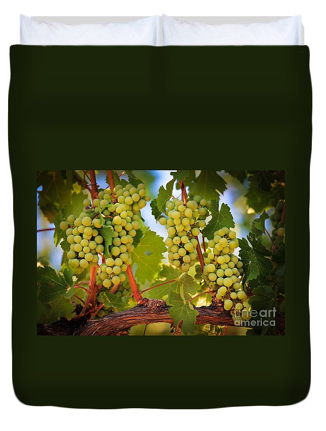 America Duvet Cover featuring the photograph Chelan Grapevines by Inge Johnsson