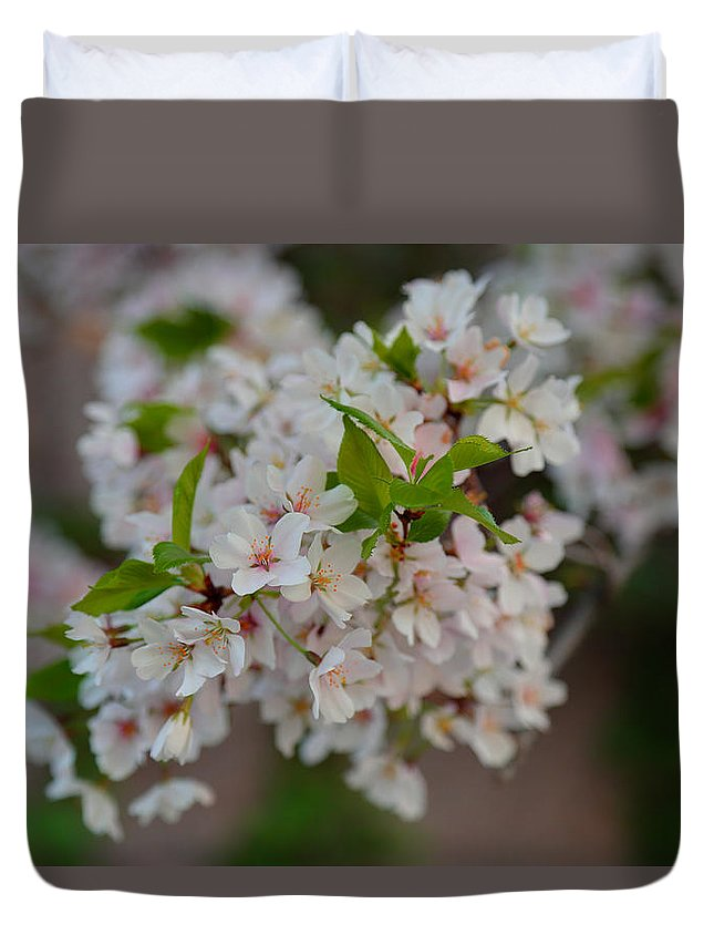 Architectural Duvet Cover featuring the photograph Cherry Blossoms 2013 - 068 by Metro DC Photography