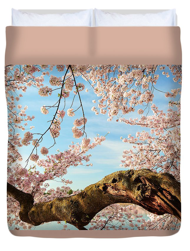 Architectural Duvet Cover featuring the photograph Cherry Blossoms 2013 - 089 by Metro DC Photography