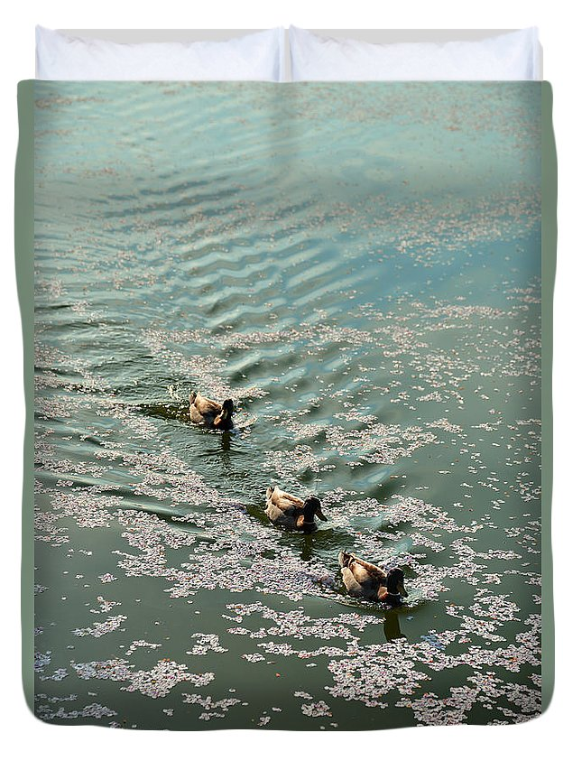 Architectural Duvet Cover featuring the photograph Cherry Blossoms 2013 - 090 by Metro DC Photography