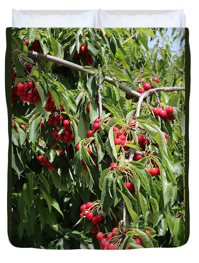 Cherry Duvet Cover featuring the photograph Cherry Tree by Carol Groenen