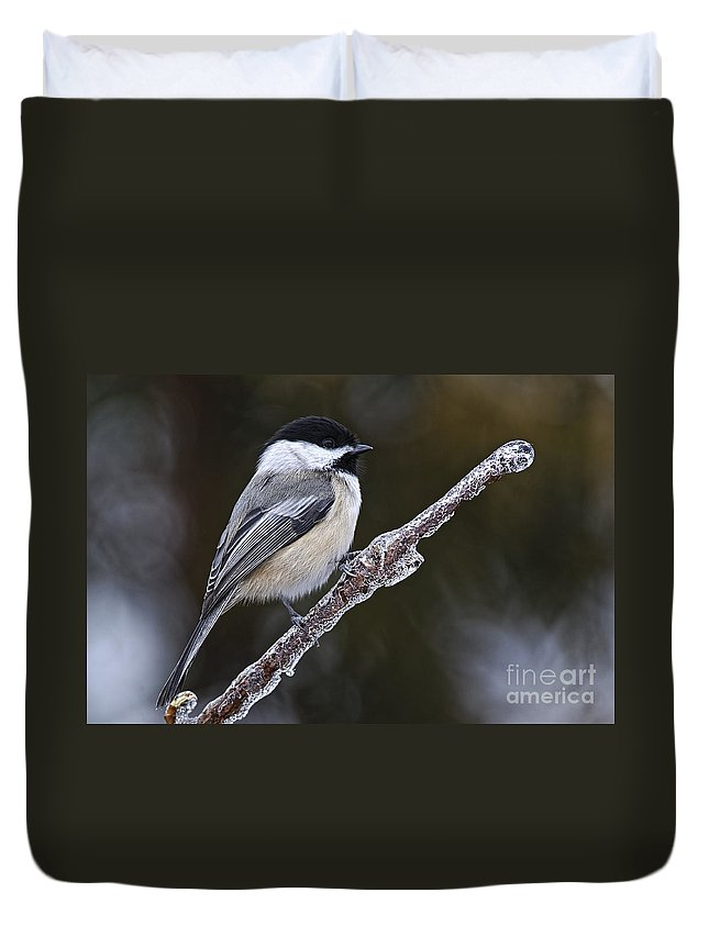 Chickadee Duvet Cover featuring the photograph Chickadee Pictures 228 by World Wildlife Photography