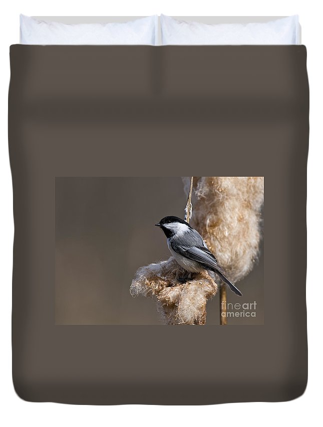 Chickadee Duvet Cover featuring the photograph Chickadee Pictures 261 by World Wildlife Photography