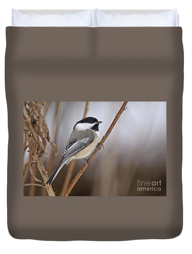 Chickadee Duvet Cover featuring the photograph Chickadee Pictures 316 by World Wildlife Photography