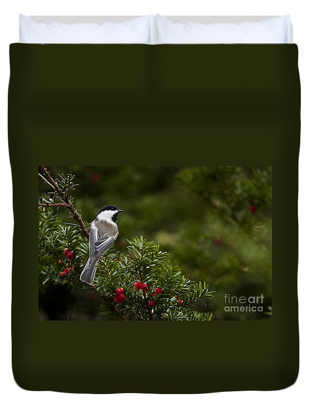 Chickadee Duvet Cover featuring the photograph Chickadee Pictures 373 by World Wildlife Photography