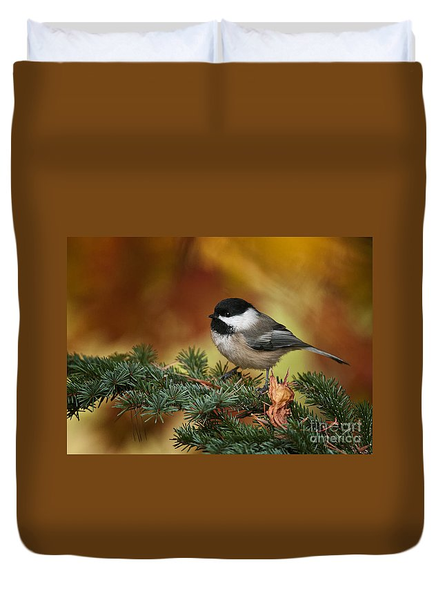Chickadee Duvet Cover featuring the photograph Chickadee Pictures 375 by World Wildlife Photography