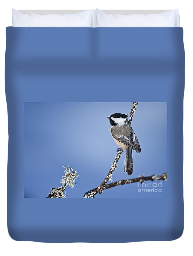 Chickadee Duvet Cover featuring the photograph Chickadee Pictures 409 by World Wildlife Photography