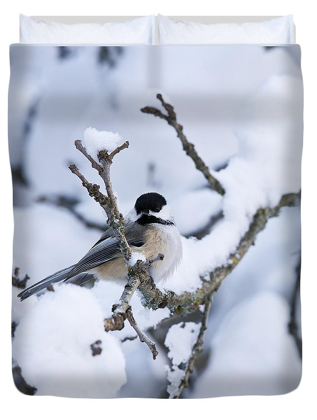 Chickadee Duvet Cover featuring the photograph Chickadee Pictures 507 by World Wildlife Photography