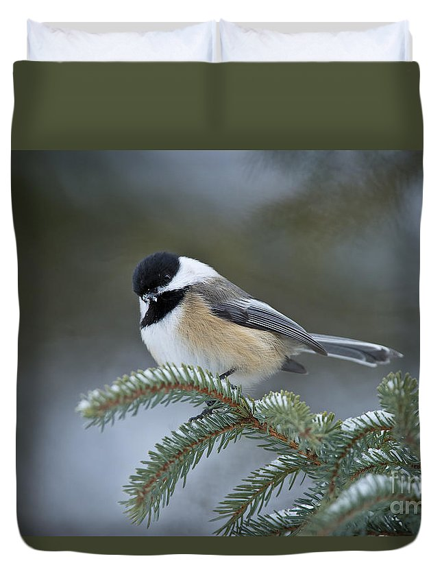 Chickadee Duvet Cover featuring the photograph Chickadee Pictures 521 by World Wildlife Photography