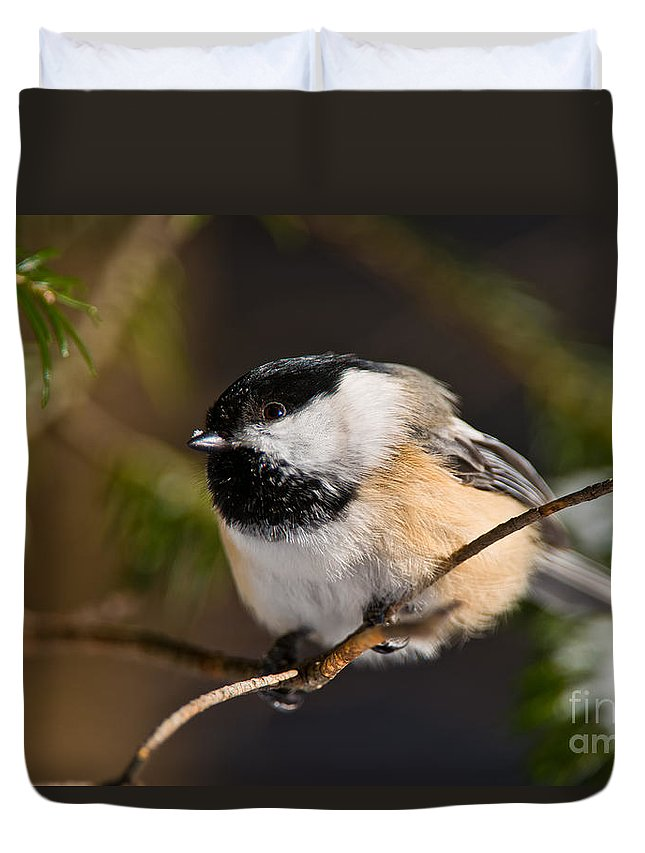 Chickadee Duvet Cover featuring the photograph Chickadee Pictures 561 by World Wildlife Photography
