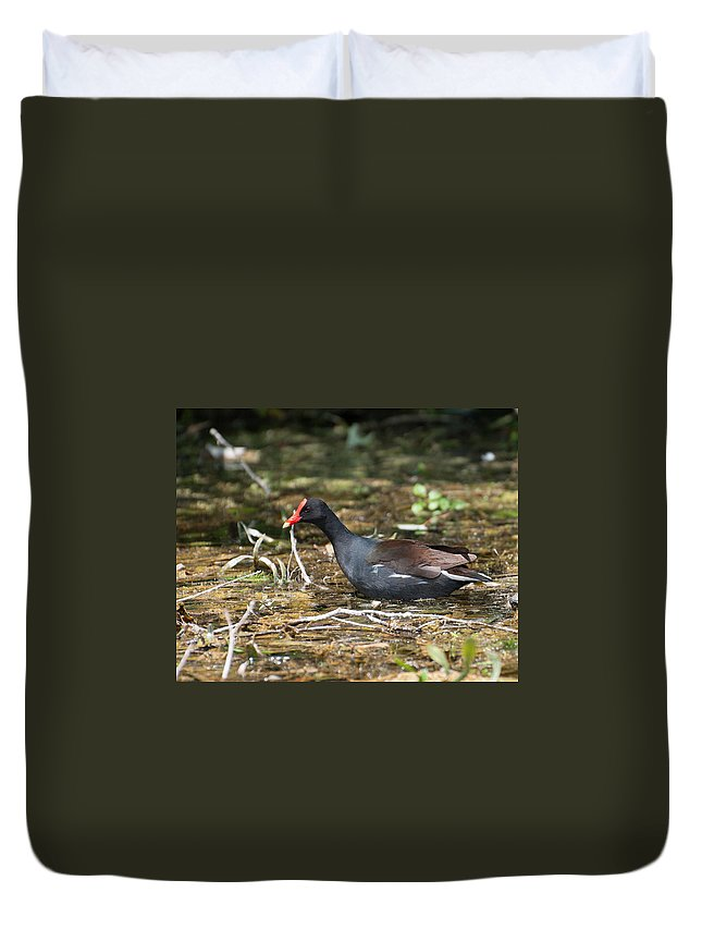 Common Duvet Cover featuring the photograph Chicken Duck by Photos By Cassandra