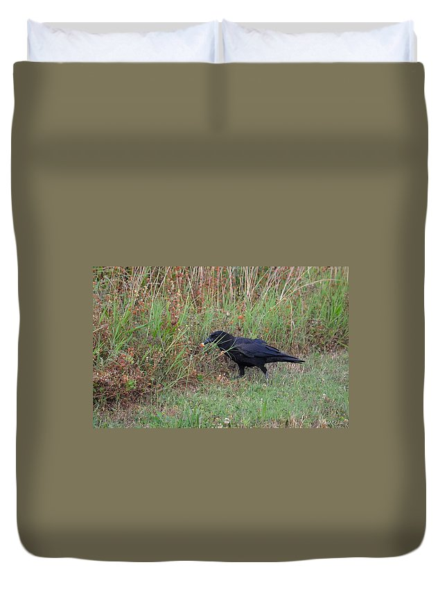 Chicken Eating Crow Duvet Cover featuring the photograph Chicken Eating Crow by Maria Urso
