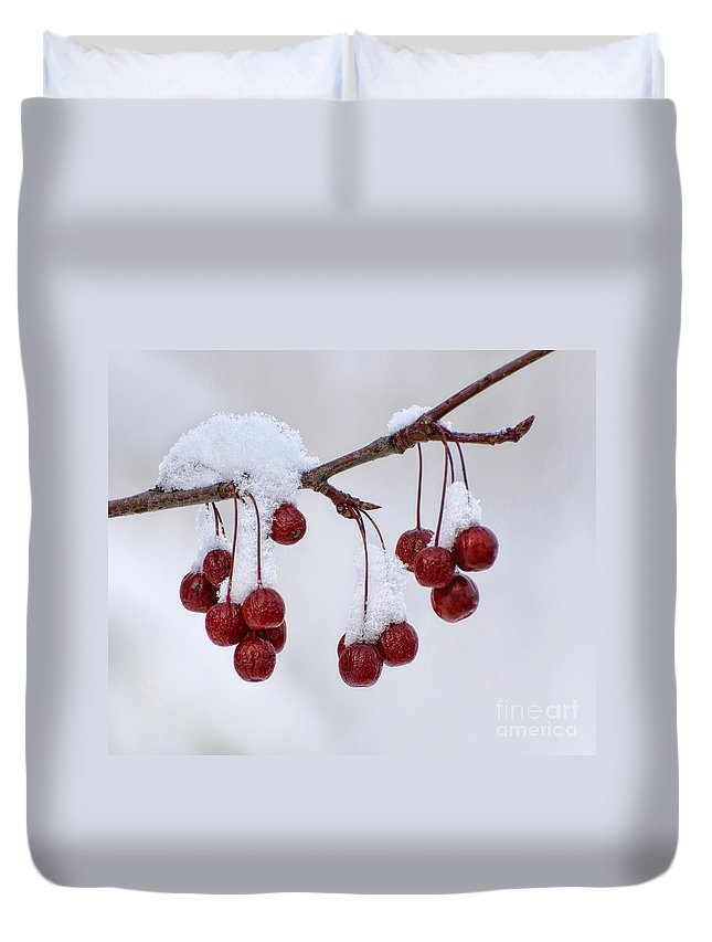 Crab Apples Duvet Cover featuring the photograph Chilled by Claudia Kuhn