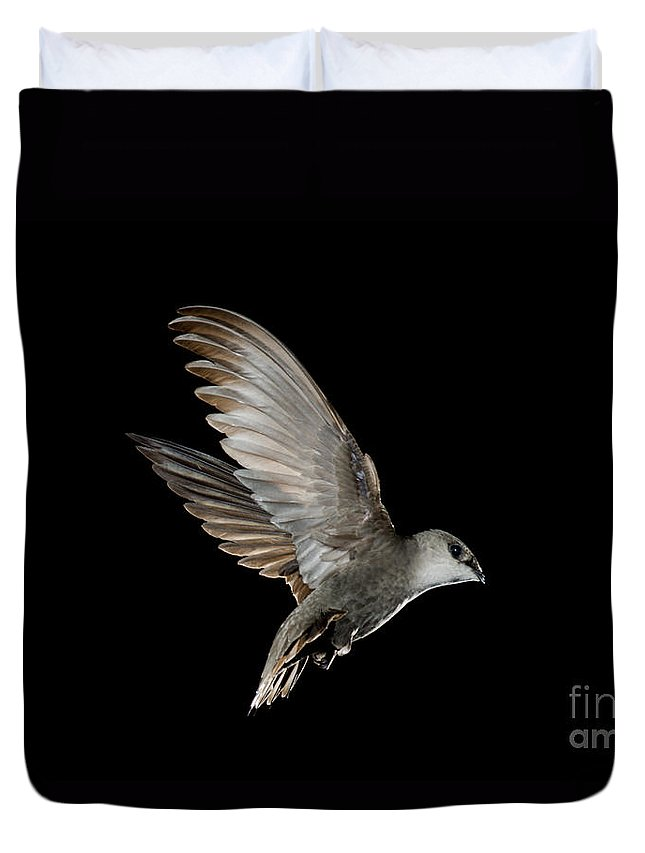 Chimney Swift Duvet Cover featuring the photograph Chimney Swift by Anthony Mercieca