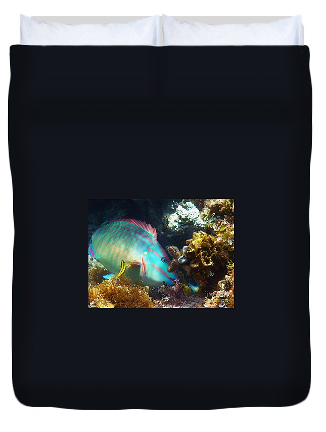 Parrotfish Duvet Cover featuring the photograph Chow Time by Li Newton