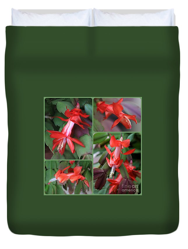 Christmas Cactus Duvet Cover featuring the photograph Christmas Cactus Collage by Carol Groenen